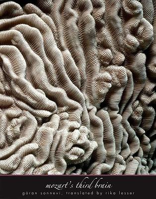Image for Mozart's Third Brain