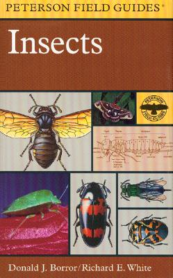 Image for Field Guide to Insects: America North of Mexico