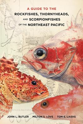Image for GUIDE TO THE ROCKFISHES, THORNYHEADS, AND SCORPIONFISHES OF THE NORTHEAST P ACIFIC
