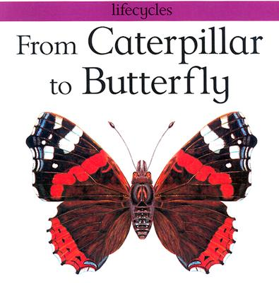 Image for From Caterpillar to Butterfly (Lifecycles)
