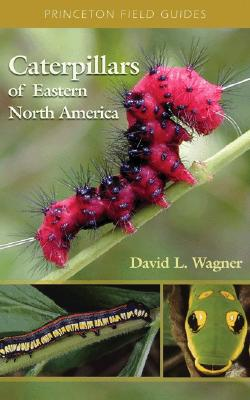 Image for Caterpillars of Eastern North America: A Guide to Identification and Natural History (Princeton Field Guides)