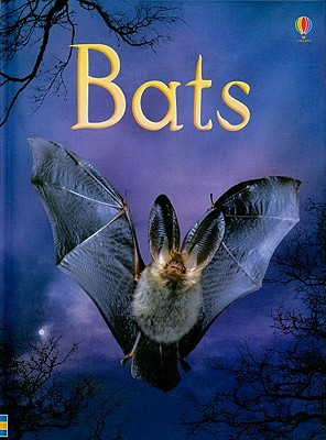 Image for Bats (Usborne Beginners Nature)