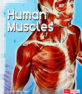 Image for HUMAN MUSCLES