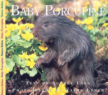 Baby Porcupine (Nature Babies), Aubrey Lang