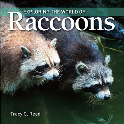 Image for Exploring the World of Raccoons