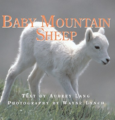 Image for Baby Mountain Sheep (Nature Babies)