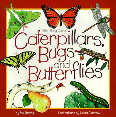 Image for Caterpillars, Bugs and Butterflies