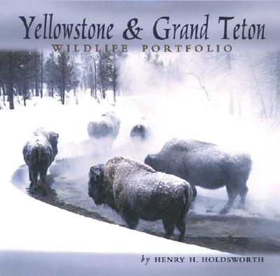 Yellowstone & Grand Teton Wildlife Portfolio, Holdsworth, Henry H.