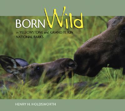 Image for Born Wild in Yellowstone and Grand Teton National Parks