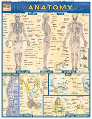 Image for Anatomy (Quickstudy Reference Guides - Academic)