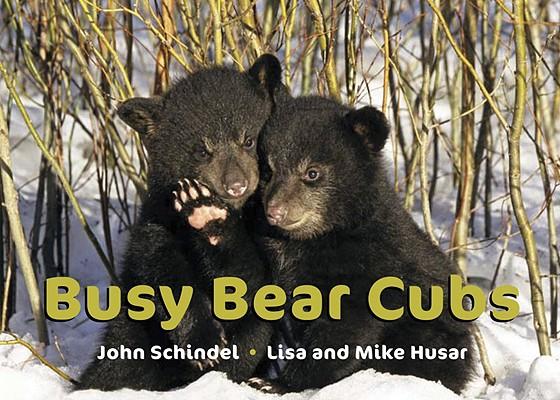 Busy Bear Cubs (A Busy Book), Schindel, John