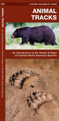 Animal Tracks, James Kavanagh