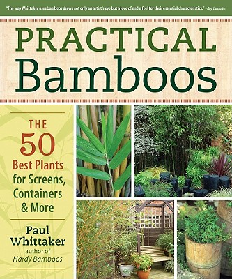 Image for PRACTICAL BAMBOOS THE 50 BEST PLANTS FOR SCREENS, CONTAINERS & MORE