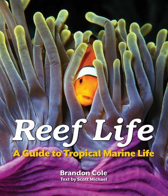 Image for Reef Life: A Guide to Tropical Marine Life