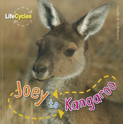 Image for Joey to Kangaroo (Life Cycles)